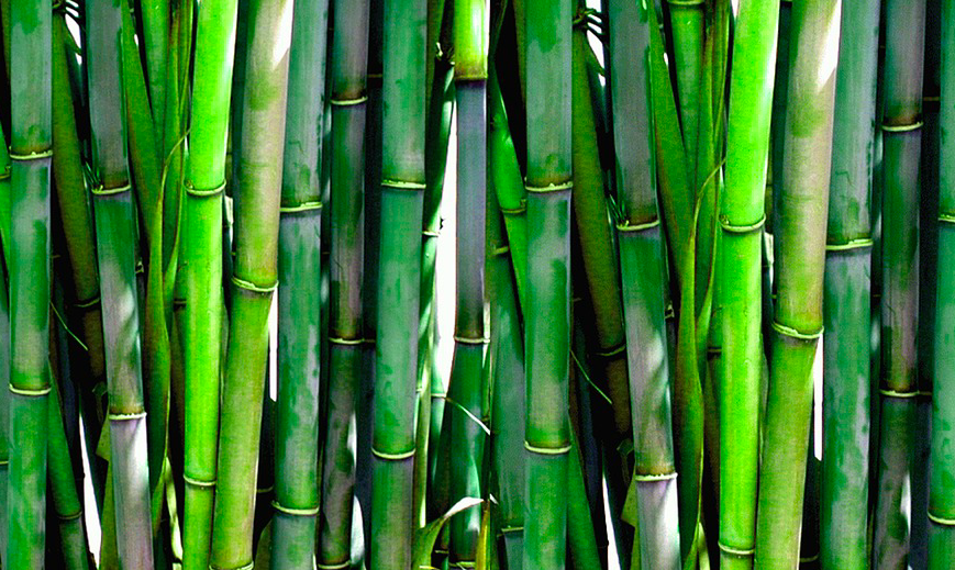 Bamboo Plant Coffee Cups
